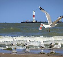 A Good Day for Sailboats & Seagulls by Mikell Herrick