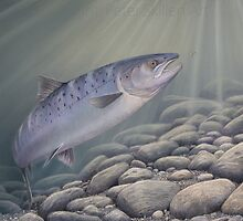 """Charmed"" Atlantic salmon chasing a blue charm fly.  by Peter Skillen"