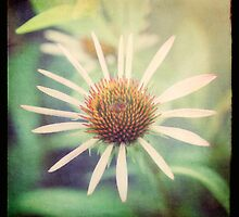 hope in a purple coneflower by Kelly Letky