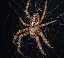 Day 2 - Spider by Nathan Colquhoun