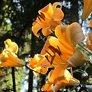 """Golden Splendor"" Family of Lilies by Pat Yager"