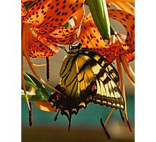 Butterfly on Turks Cap Lily Photographic Print