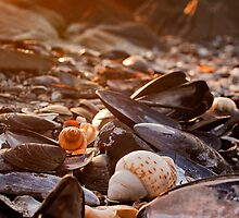 Sunset Shells by CollinScott