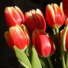 tulips on black by freshairbaloon