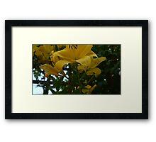 Sea of Yellow Framed Print
