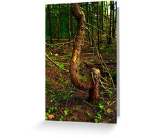 Twisted Tree in the Forrest Greeting Card