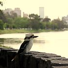 Kookaburra in Melbourne by PerkyBeans