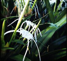 Pretty in White by Niki Smallwood