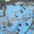 Flying Foxes at Rest by KittenFlower