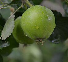 Little Green Apples by lynn carter