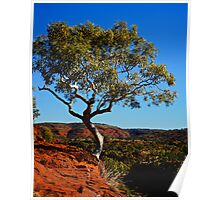 Lonely Snow Gum Poster