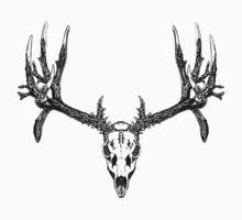 Monster mule deer skull by saltypro