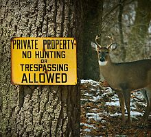 No Hunting Sign and Whitetail Buck by Randall Nyhof