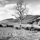 Tree from the Southern Upland Way, Scottish Borders by Iain MacLean