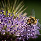 Insect on Cone Flower by homendn
