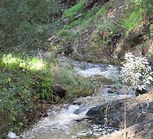 Morialta Creek! Cons. Park, Adelaide foothills, South Australia. by Rita Blom