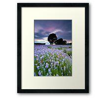 Lavender Blues Framed Print