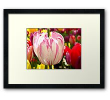Stripes and Colors Framed Print