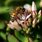 Honey Bee by LeJour
