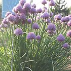 Chives by Karen Jayne Yousse
