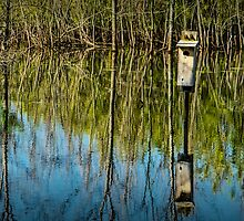 Nesting Box in a Pond in West Michigan by Randall Nyhof