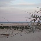 Grass in the dunes by emsta