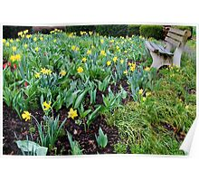 Watching Daffodils Grow in the Rain Poster