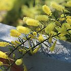 Wattle by Jack Miller