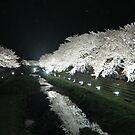 Cherry Blossoms at Night  by Patty (Boyte) Van Hoff