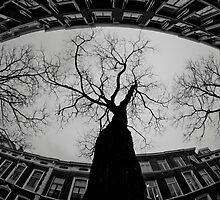 Tree in the city by mattijs