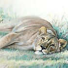 Time out - African lioness by steve morvell
