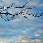 branch at sunset by metriognome