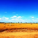 The Colours of Cape York by dozzam
