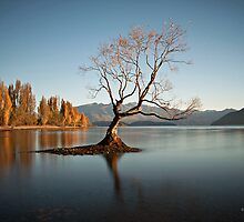 Wanaka - That Tree #3 by Brad Grove