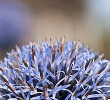 Allium by Moonlake