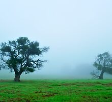 foggy morning field #2 by metriognome