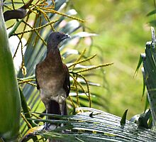 I'm A Grey Headed Chachalaca by Sauropod8