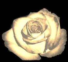 A Rose Of A Different Color by Gina Kaye