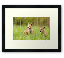 LOOKING FOR DUCKS Framed Print