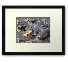 Fish Eating at Navajo Lake New Mexico  Framed Print