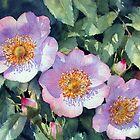 Sunny Dog Roses  by Ann Mortimer