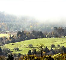 Misty Pennsylvania Morning by Mikell Herrick