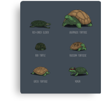 Know Your Turtles Canvas Print