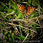 Become a Butterfly by Kim Ogden