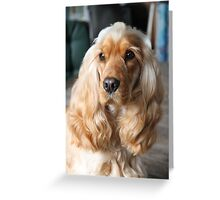 Jessie: My English Cocker Spaniel Greeting Card