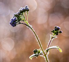 Wild Bokeh #1 by Brad Grove