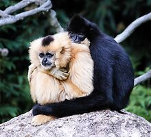 two monkeys by dirk hinz