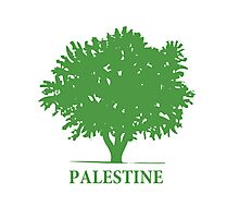 Palestine olive tree T shirts & Gifts Photographic Print