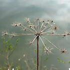 Pond flower 3 by Blonddesign
