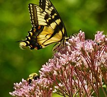Swallowtail Fluttering By by PineSinger